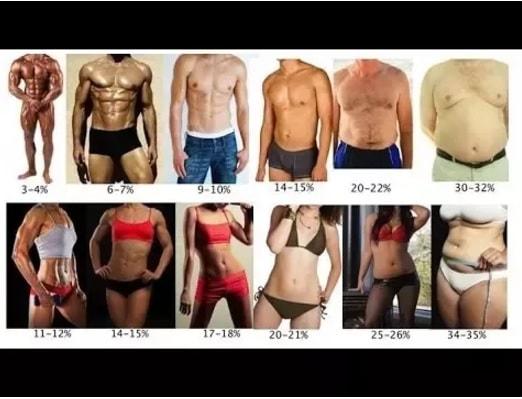 30代女性 体脂肪率 平均 理想